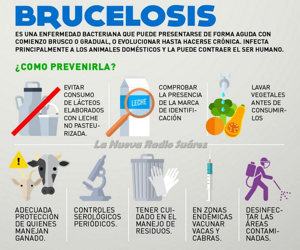 Nueva Ley De Brucelosis
